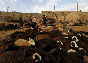 Afghan vendors talk with each other at a livestock market in Kabul, Afghanistan
