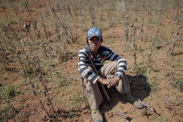 A local villager sits at an old poppy field after assisting authorities to destroy a new one, above the village of Tar-Pu, in the mountains of Shan State