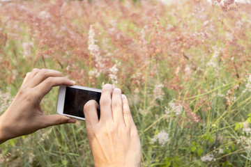 taking picture of wild flowers.