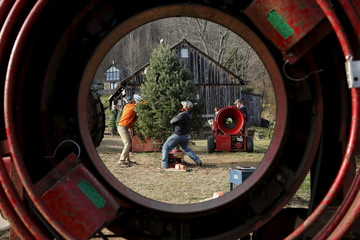 Employees are seen through a bailer while prepping a customer's freshly cut tree at Snickers Gap Christmas Tree Farm in Virginia