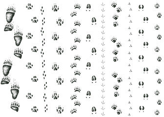 Vector set of walking wild wood animal and bird tracks
