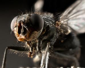 Fly extreme macro
