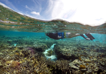 A tourist snorkels above coral in the lagoon located on Lady Elliot Island in Australia