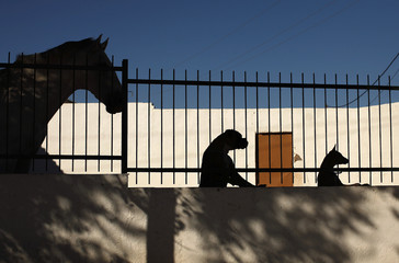 A horse, a boxer dog and a podenco dog are silhouetted in Marinaleda
