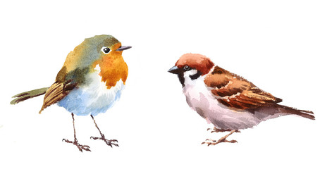Robin and Sparrow Two Birds Watercolor Hand Painted Illustration Set isolated on white background Wall mural
