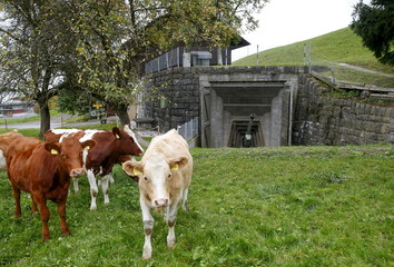 The Wider Image: A new life for Swiss army bunkers