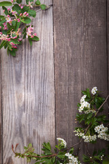 SSpring Flowers hawthorn on background of old vintage blue board