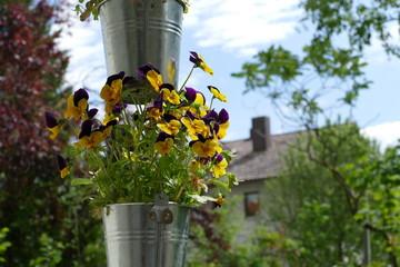 Gartenblumen im Eimer 4