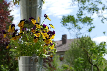 Gartenblumen im Eimer 1