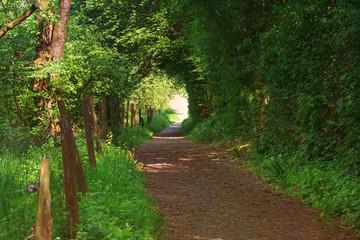 Kleiner Weg durch einen Naturwald.