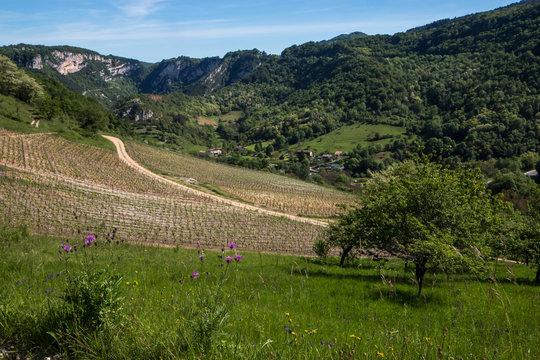 Paysage du Bugey , avec les vignes du Cerdon , département de l' Ain