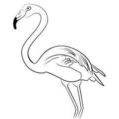 Flamingo bird black white sketch