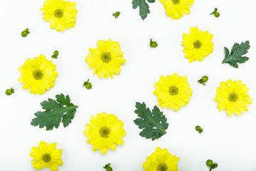Top view of beautiful blooming small yellow flowers isolated on white