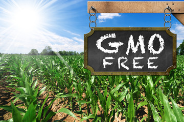 Sign of GMO Free on a Corn Field