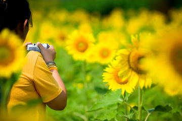 People taking a photo of sunflowers