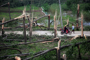 People look at damaged trees after a tornado hit Funing on Thursday, in Yancheng