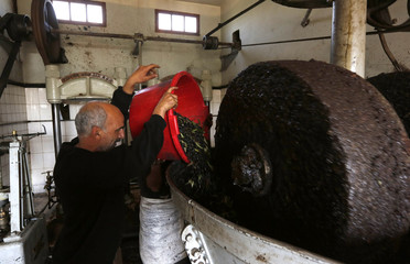 Labourer prepares to extract oil from olive paste at a traditional olive oil processing factory in the eastern village of Tazmelt
