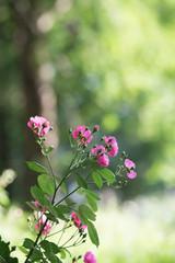 トレッキング途中の花