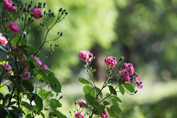 バラの公園