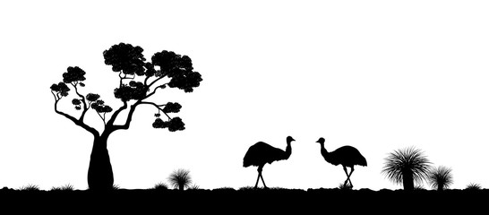 Australian landscape. Black silhouette of emu ostrich on white background. The nature of Australia. Isolated vector graphic