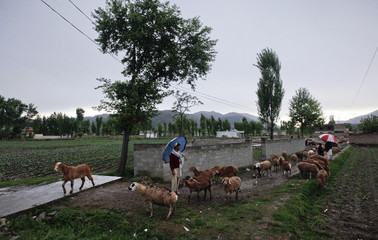 A man with an umbrella guides his herd of goats past a boundary wall of the demolished compound in Abbottabad