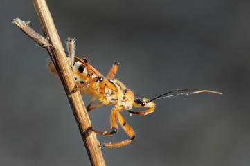 bug on a branch