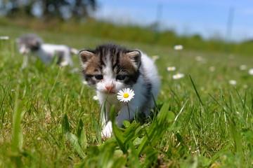 première sortie dans le jardin pour des chatons de 3 semaines