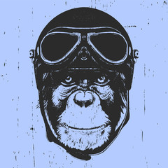 Portrait of Monkey with Vintage Helmet. Vector
