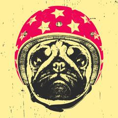 Portrait of Pug Dog with Helmet. Vector