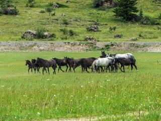 Herd.