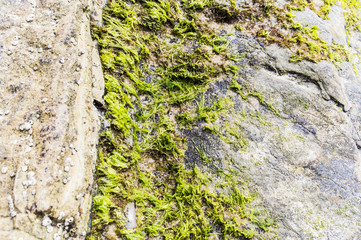 Boulder rock background with green aglae