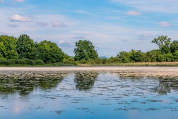 Au bord de l'étang dans les Dombes
