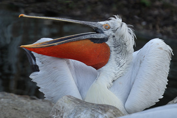 An angry bird.
