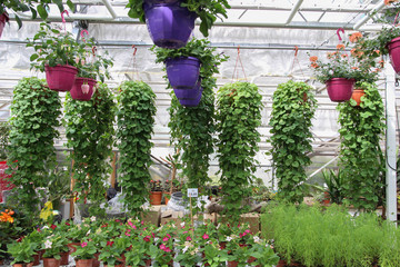 Greenhouse farming. Garden center selling plants in a greenhouse