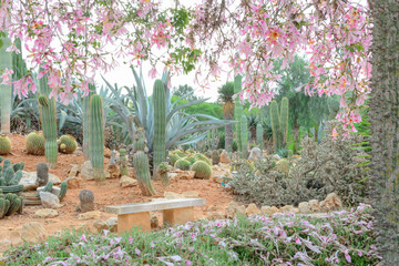 A garden of silk floss trees and cacti.