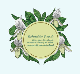 Paphiopedilum orchids card by hand drawing.Orchids vector card on blue background.