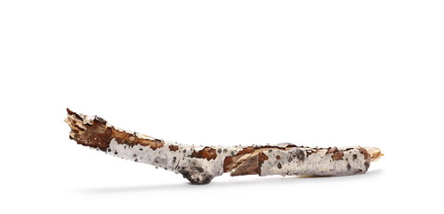 dry rotten birch branch isolated on white background