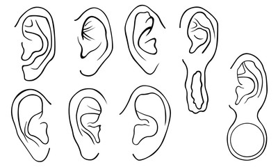 Set of different ears isolated on white