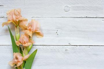 tender iris flowers over white wooden table