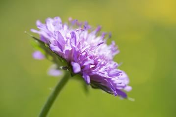 Macro fotografia di un fiore selvatico in piena fioritura