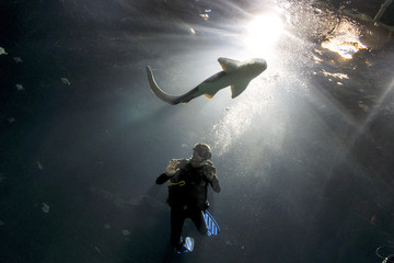 Zookeeper Steffens cleans aquarium's pane as leopard shark passes during animal stocktaking at Hagenbeck Zoo in Hamburg