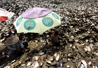 Workers collect artificially cultivated freshwater pearls from pearl oysters at a pearl production factory in Zhuji