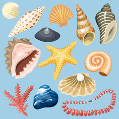 Sea shells marine cartoon clam-shell and ocean starfish coralline vector illustration.