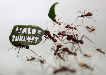 """Ants carry a leaf with a slogan reading """"Forest = Future"""" at the zoo in Cologne"""