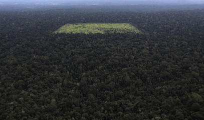 An aerial view shows a tract of Amazon rainforest which has been cleared for agriculture near Santarem