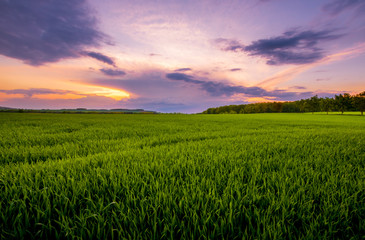 Sunset over the green field. Wall mural