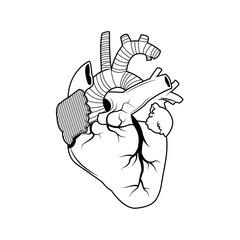 human heart - anatomy biology healthy image vector illustration