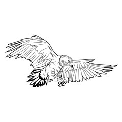 american bald eagle flying wildlife image vector illustration