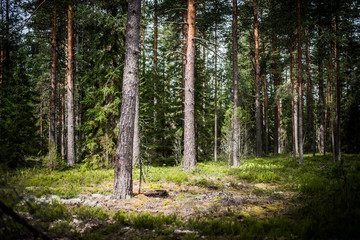 Wild trees in forest