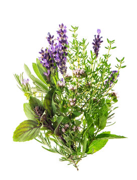 Fresh herbs spices rosemary thyme sage mint basil lavender